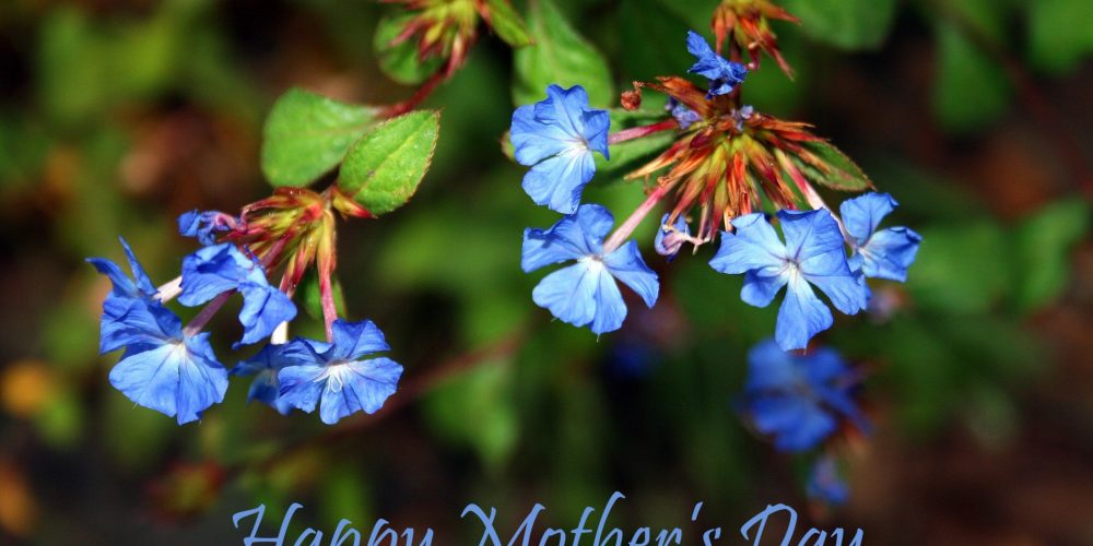 MothersDayBlueFlowers